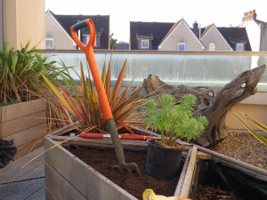 Fork in soil in roof-garden planter