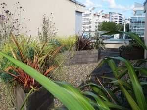 View from a planter in roof garden